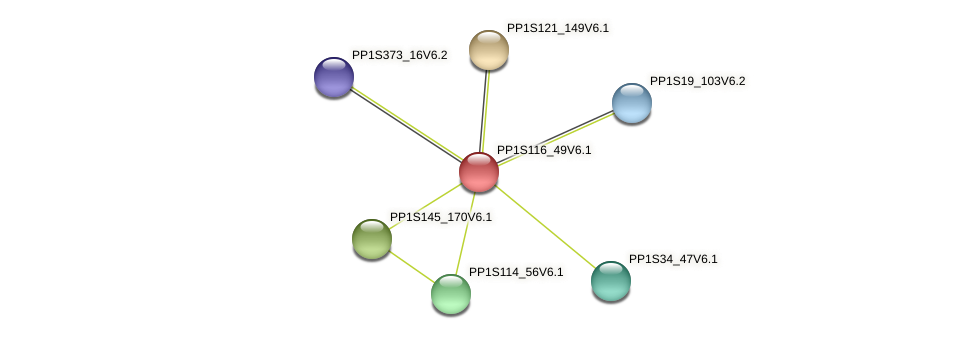 PP1S116_49V6.1 protein (Physcomitrella patens) - STRING interaction network
