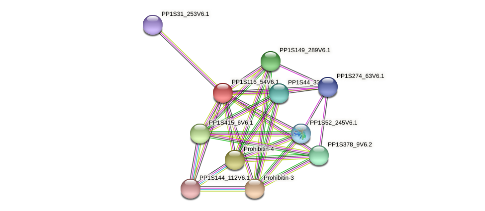 PP1S116_54V6.1 protein (Physcomitrella patens) - STRING interaction network