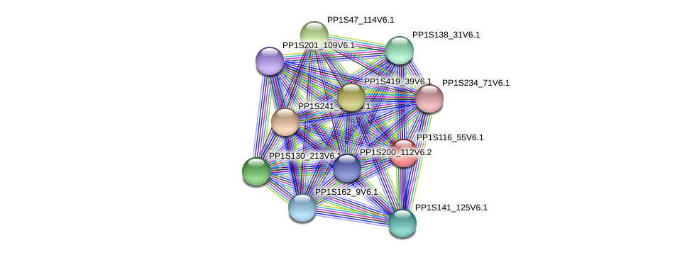 PP1S116_55V6.1 protein (Physcomitrella patens) - STRING interaction network