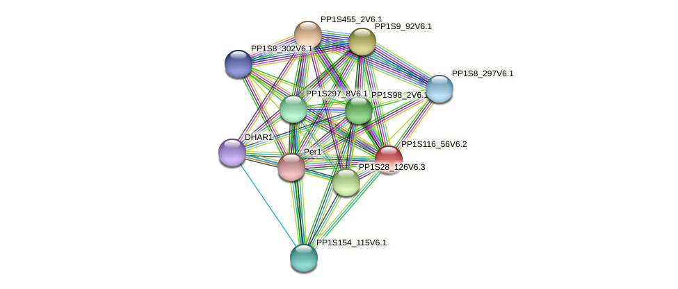 PP1S116_56V6.1 protein (Physcomitrella patens) - STRING interaction network