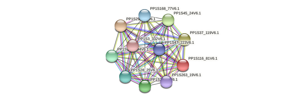 PP1S116_81V6.1 protein (Physcomitrella patens) - STRING interaction network