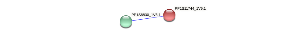 PP1S11744_1V6.1 protein (Physcomitrella patens) - STRING interaction network