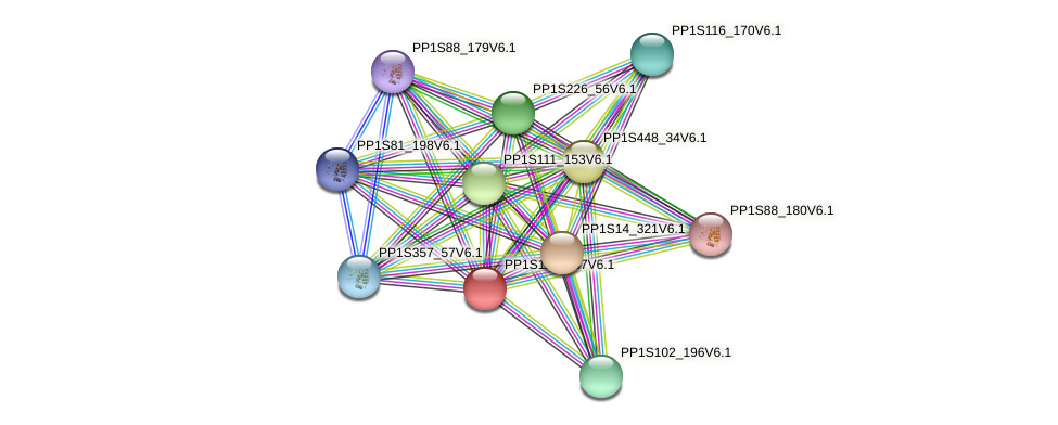 PP1S117_137V6.1 protein (Physcomitrella patens) - STRING interaction network