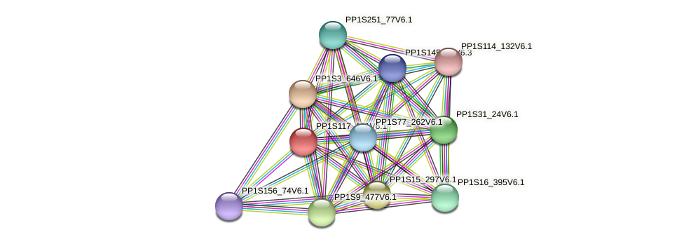 PP1S117_181V6.1 protein (Physcomitrella patens) - STRING interaction network
