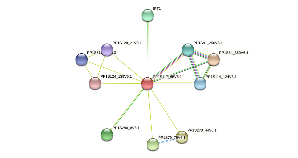 PP1S117_65V6.1 protein (Physcomitrella patens) - STRING interaction network