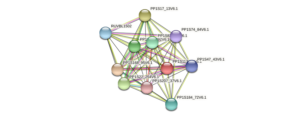 PP1S117_73V6.1 protein (Physcomitrella patens) - STRING interaction network