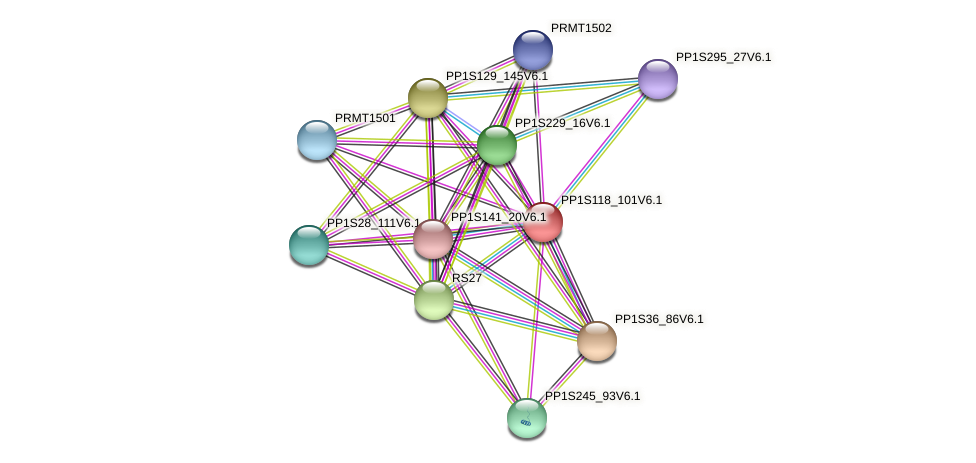PP1S118_101V6.1 protein (Physcomitrella patens) - STRING interaction network
