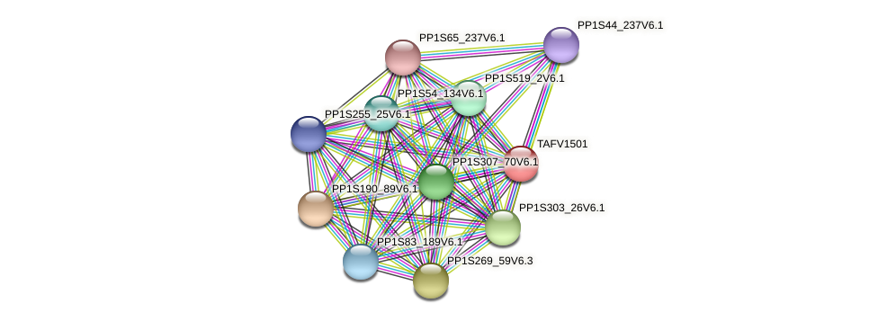 TAFV1501 protein (Physcomitrella patens) - STRING interaction network