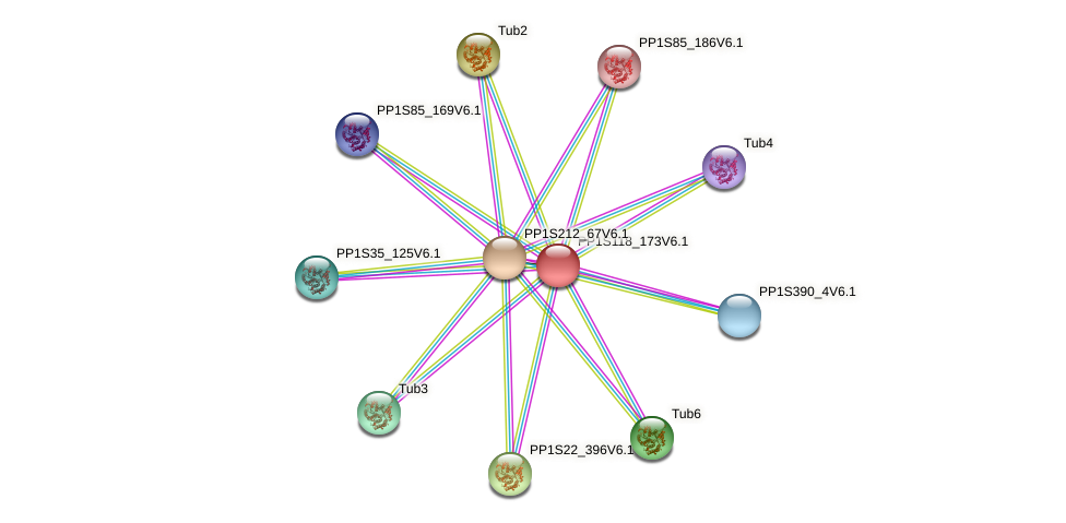 PP1S118_173V6.1 protein (Physcomitrella patens) - STRING interaction network