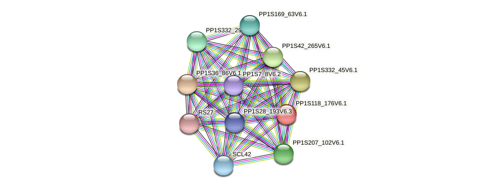 PP1S118_176V6.1 protein (Physcomitrella patens) - STRING interaction network