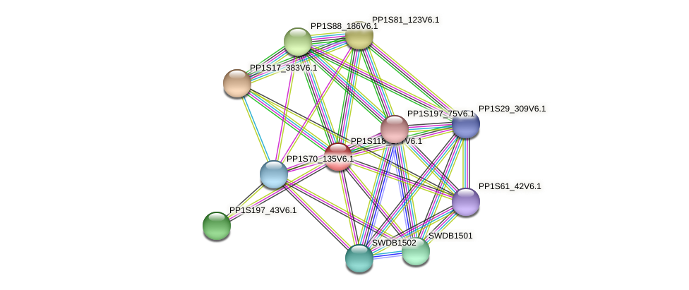 PP1S118_177V6.1 protein (Physcomitrella patens) - STRING interaction network