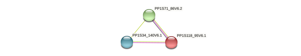 PP1S118_95V6.1 protein (Physcomitrella patens) - STRING interaction network