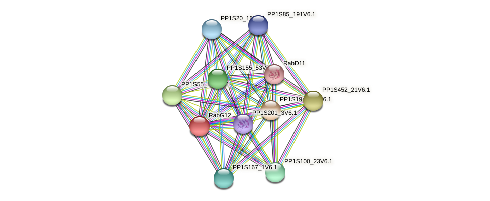 RabG12 protein (Physcomitrella patens) - STRING interaction network