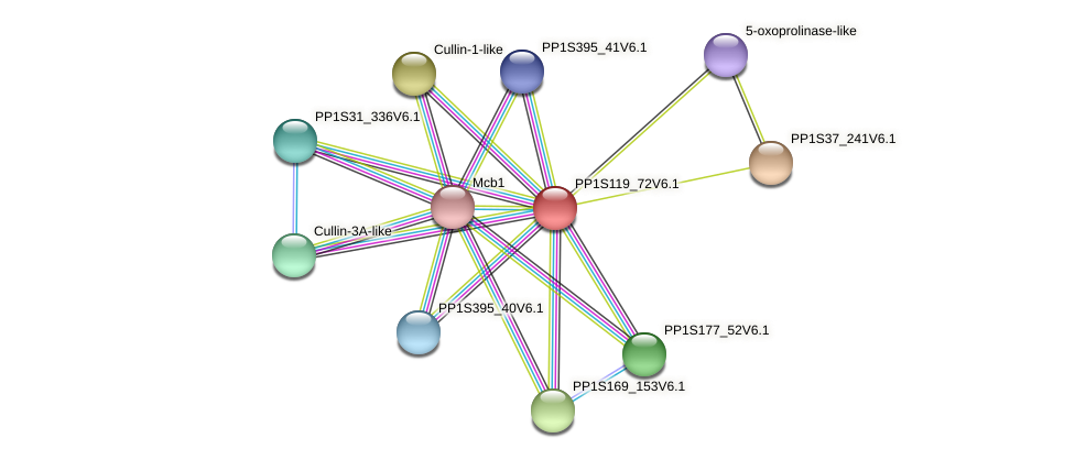 PP1S119_72V6.1 protein (Physcomitrella patens) - STRING interaction network