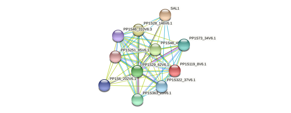 PP1S119_8V6.1 protein (Physcomitrella patens) - STRING interaction network