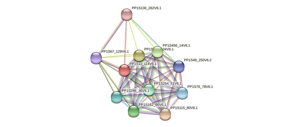 PP1S11_114V6.1 protein (Physcomitrella patens) - STRING interaction network