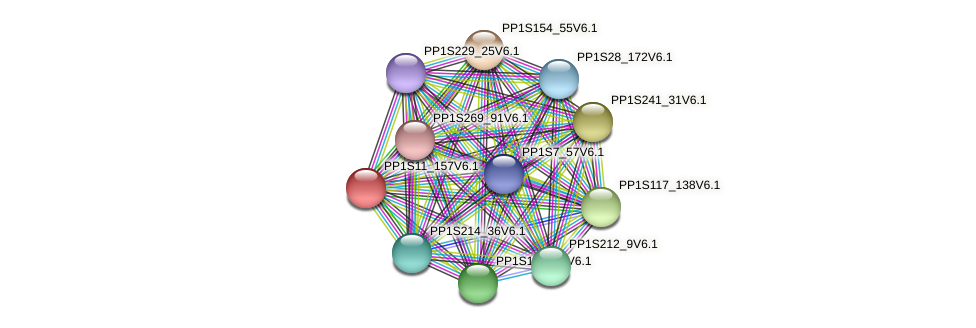 PP1S11_157V6.1 protein (Physcomitrella patens) - STRING interaction network