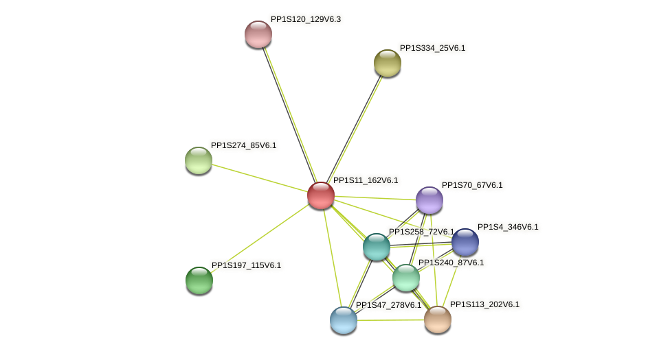 PP1S11_162V6.1 protein (Physcomitrella patens) - STRING interaction network