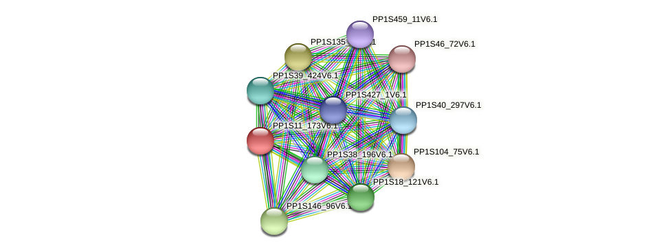 PP1S11_173V6.1 protein (Physcomitrella patens) - STRING interaction network