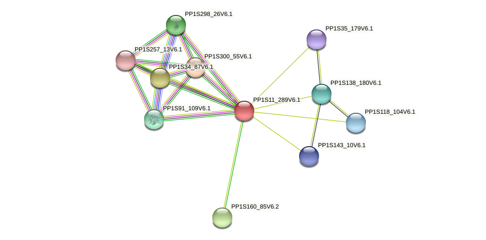 PP1S11_289V6.1 protein (Physcomitrella patens) - STRING interaction network