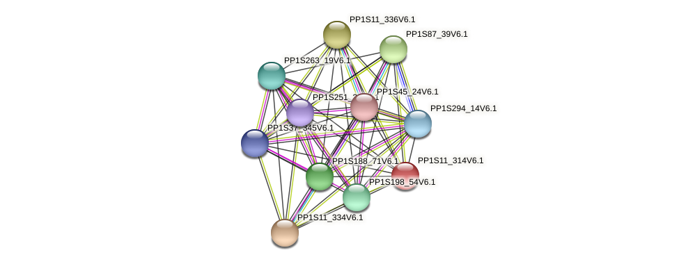 PP1S11_314V6.1 protein (Physcomitrella patens) - STRING interaction network