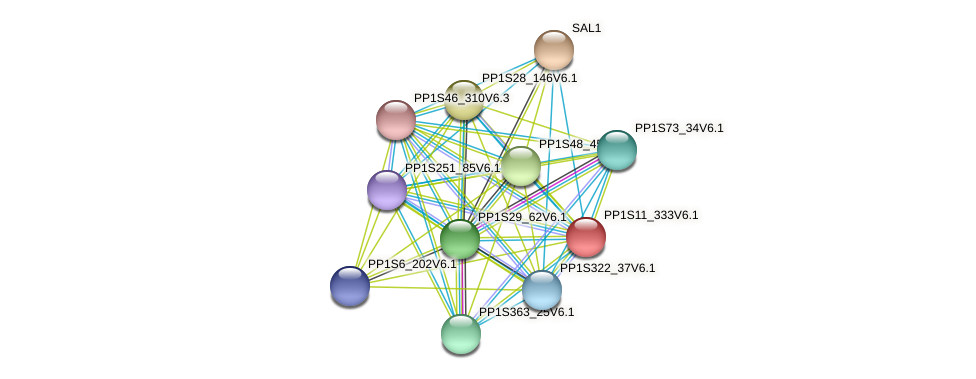 PP1S11_333V6.1 protein (Physcomitrella patens) - STRING interaction network