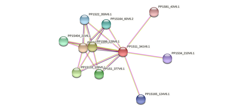 PP1S11_341V6.1 protein (Physcomitrella patens) - STRING interaction network
