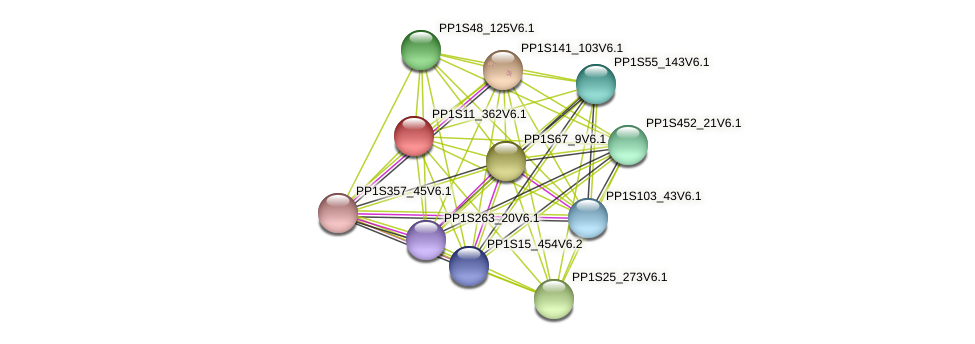PP1S11_362V6.1 protein (Physcomitrella patens) - STRING interaction network