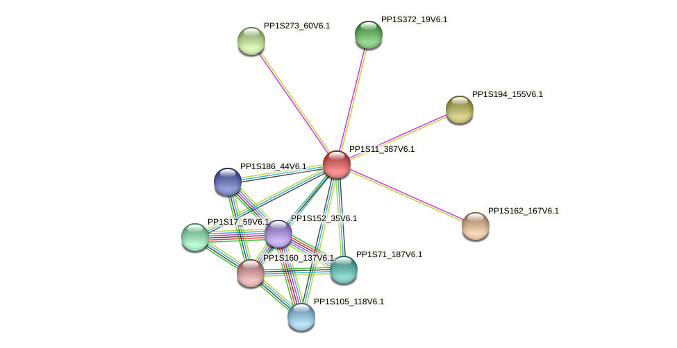 PP1S11_387V6.1 protein (Physcomitrella patens) - STRING interaction network