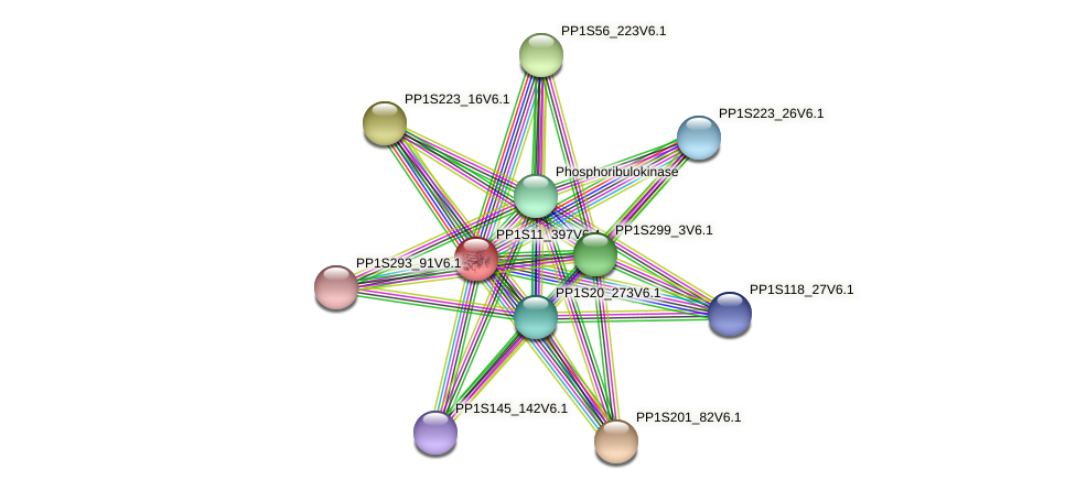 PP1S11_397V6.4 protein (Physcomitrella patens) - STRING interaction network