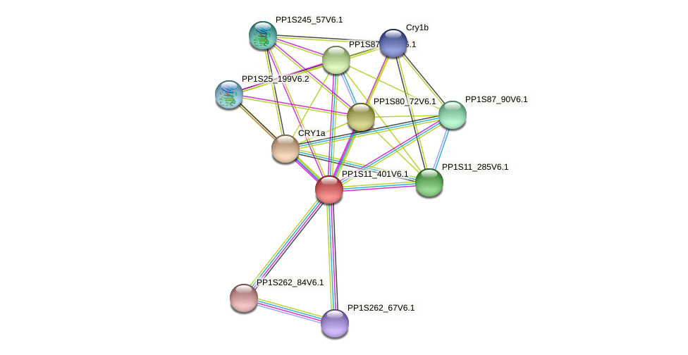 PP1S11_401V6.1 protein (Physcomitrella patens) - STRING interaction network