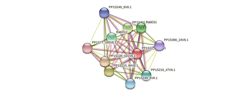 PP1S11_404V6.1 protein (Physcomitrella patens) - STRING interaction network