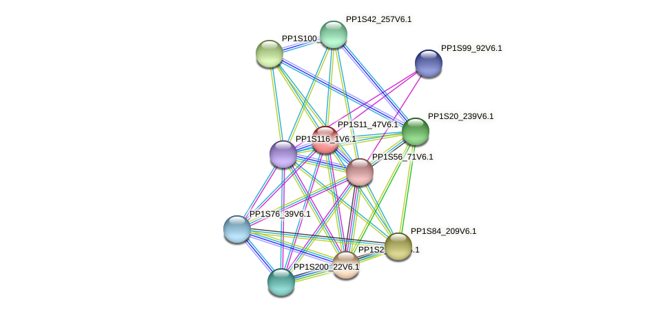 PP1S11_47V6.1 protein (Physcomitrella patens) - STRING interaction network