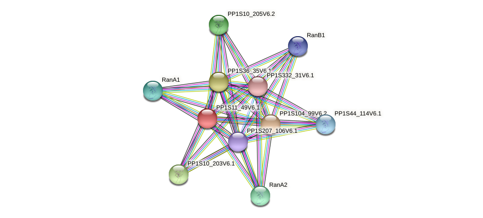 PP1S11_49V6.1 protein (Physcomitrella patens) - STRING interaction network