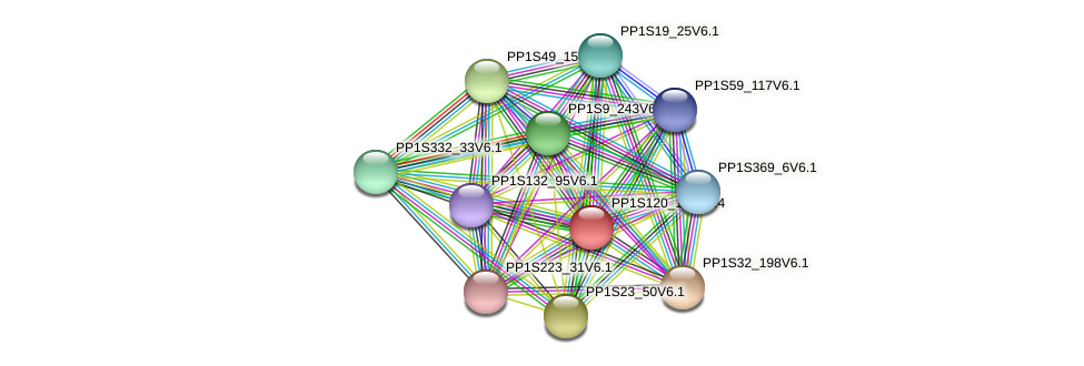 PP1S120_131V6.1 protein (Physcomitrella patens) - STRING interaction network