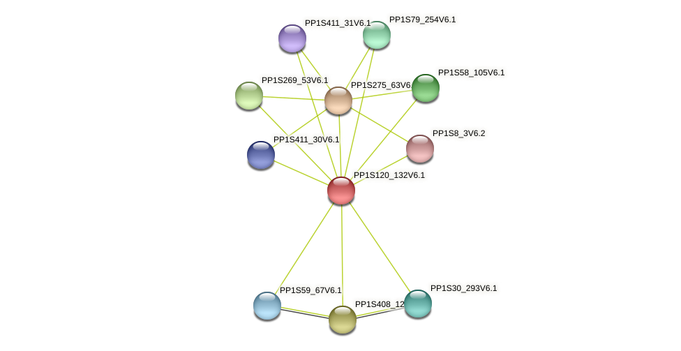 PP1S120_132V6.1 protein (Physcomitrella patens) - STRING interaction network