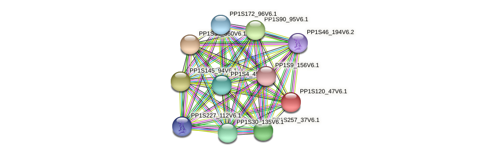 PP1S120_47V6.1 protein (Physcomitrella patens) - STRING interaction network