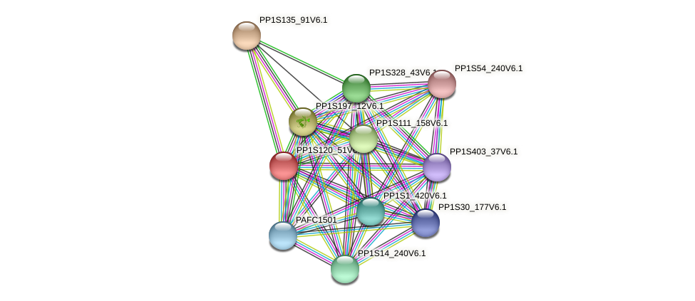 PP1S120_51V6.1 protein (Physcomitrella patens) - STRING interaction network