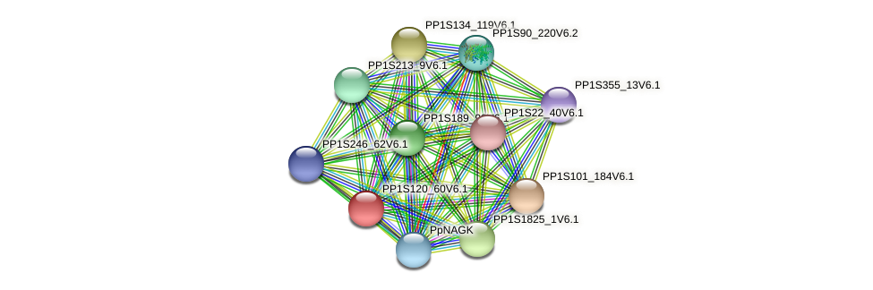 PP1S120_60V6.1 protein (Physcomitrella patens) - STRING interaction network