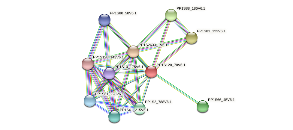 PP1S120_70V6.1 protein (Physcomitrella patens) - STRING interaction network
