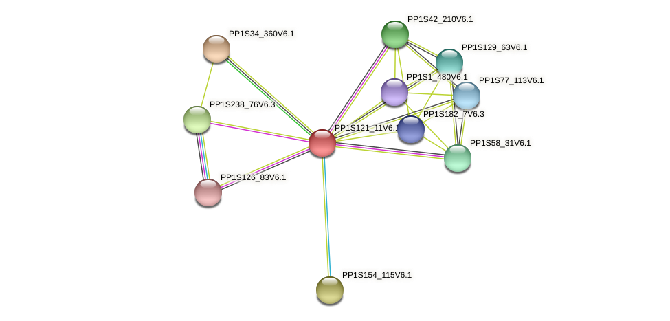PP1S121_11V6.1 protein (Physcomitrella patens) - STRING interaction network