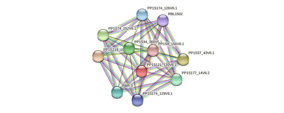 PP1S121_120V6.1 protein (Physcomitrella patens) - STRING interaction network