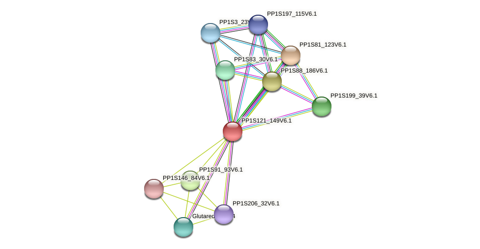 ppabcc1 protein (Physcomitrella patens) - STRING interaction network