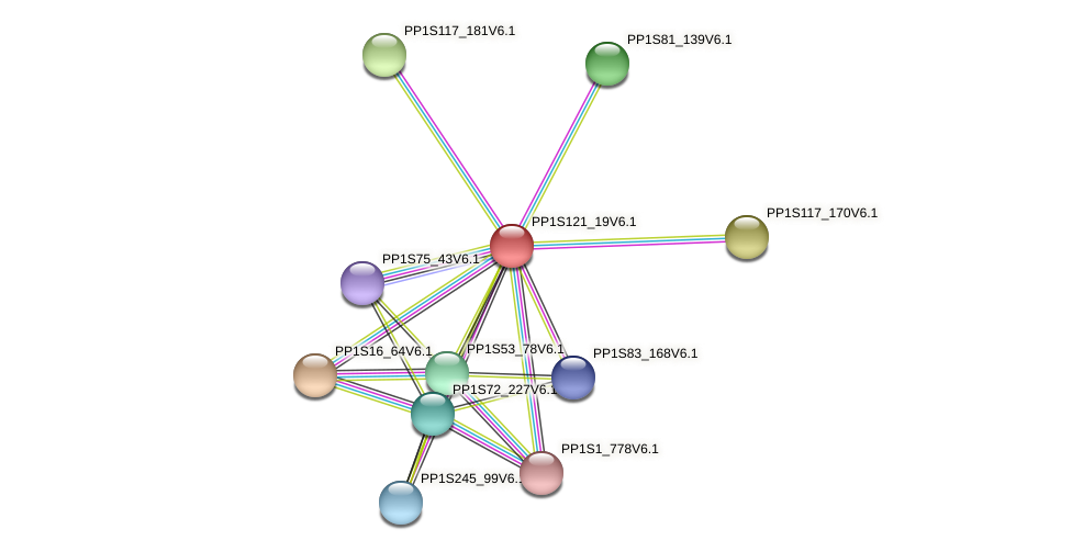PP1S121_19V6.1 protein (Physcomitrella patens) - STRING interaction network