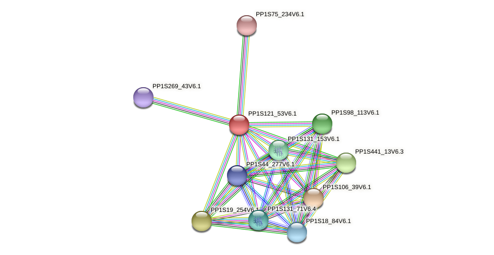 PP1S121_53V6.1 protein (Physcomitrella patens) - STRING interaction network