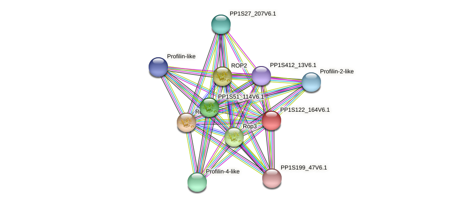 PP1S122_164V6.1 protein (Physcomitrella patens) - STRING interaction network