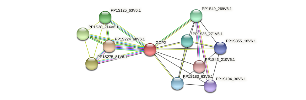 GCP2 protein (Physcomitrella patens) - STRING interaction network