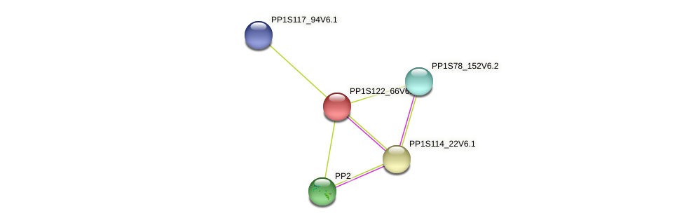 PP1S122_66V6.2 protein (Physcomitrella patens) - STRING interaction network