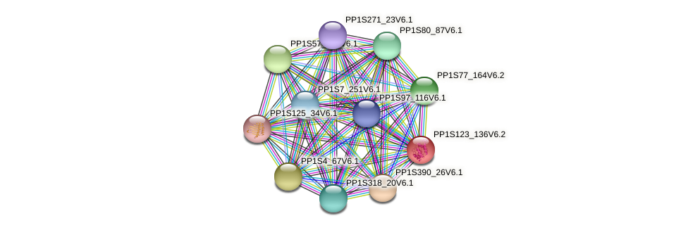 PP1S123_136V6.2 protein (Physcomitrella patens) - STRING interaction network