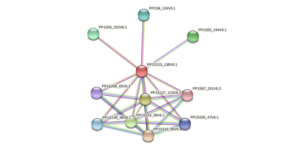 PP1S123_138V6.1 protein (Physcomitrella patens) - STRING interaction network